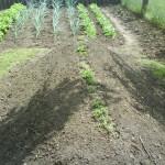 Dombágyásos kertművelés