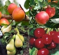 Gyümölcsök a számunkra nélkülözhetetlen antioxidánsokkal