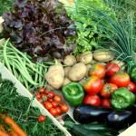 Dobozban az egészség, avagy mindig friss zöldségek a termelőtől