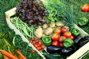 Válaszd az agrárképzések közül a Zöldség- és Gyümölcstermesztő tanfolyamot!