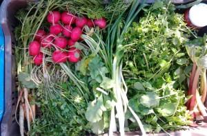 Hetente friss zöldség, gyümölcs