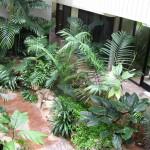 A növények közérzetjavító szerepe