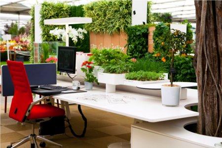 A növények egészségre gyakorolt hatása a munkahelyeken