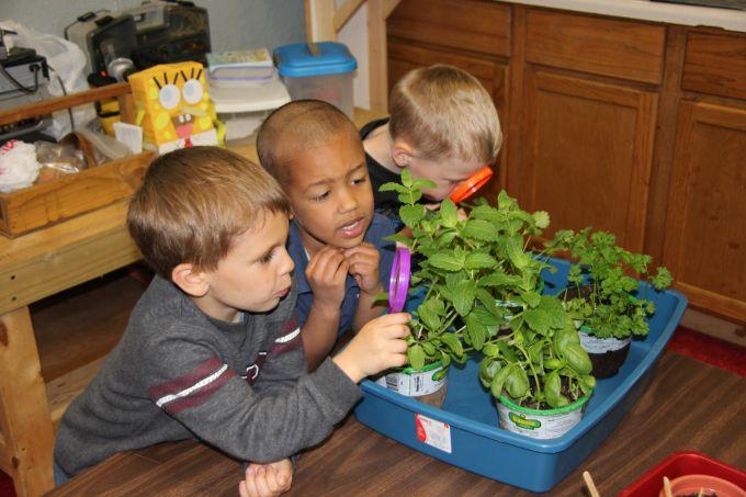 A növényeknek az iskolákban is fontos szerepük van.