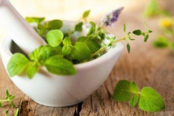 Kertész + gyógy- és fűszernövény termesztő tanfolyam