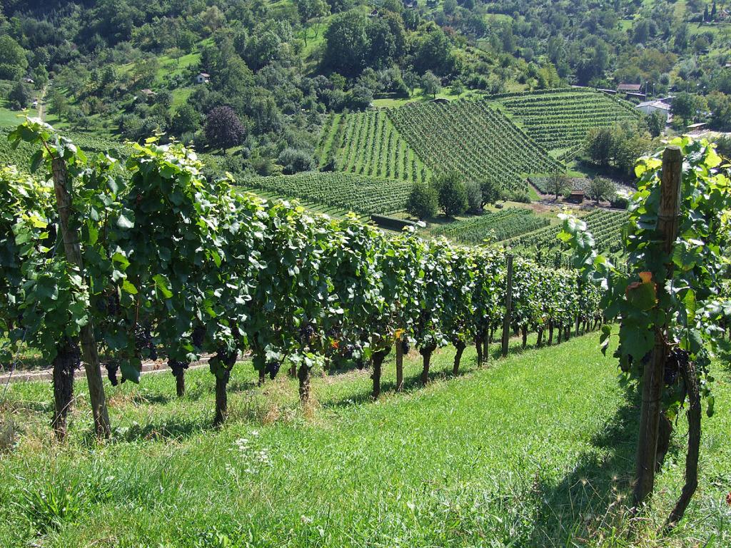 Szőlész-borász tanfolyam