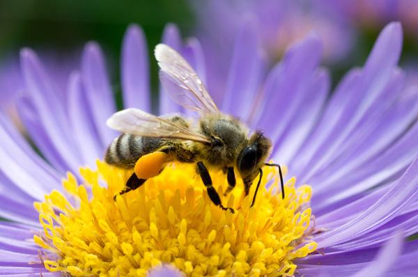 Mérgek vagy méhek - a Greenpeace kiadványa - letölthető itt