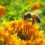 Mérgek vagy méhek - A Greenpeace kiadványa