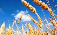 Válaszd az agrárképzések közül az Aranykalászos gazda tanfolyamot!