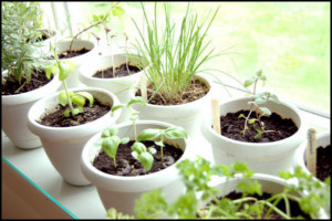 Hobbi fűszernövény és gyógynövény tanfolyam